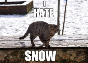 Image 4 - Funny-Images-Photos-Of-Cats-That-Hate-Snow-400x287