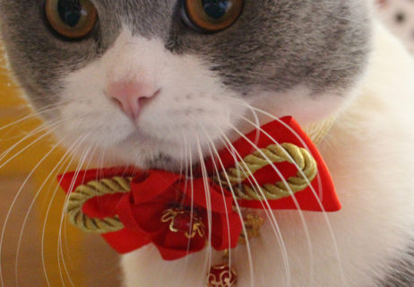 NEW-YEAR-Pet-Cat-Chinese-Style-Collars