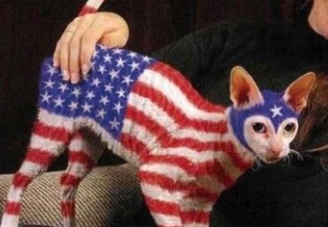 american-flag-fails-cat-e1341299262702