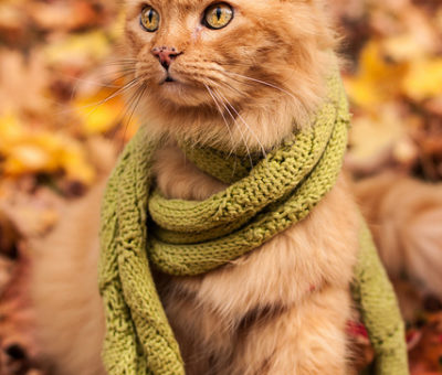 autumn-autumn-fall-leaves-beautiful-cat-favim-com-632397