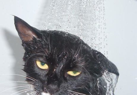 black-cat-shower-water-pet