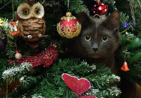 c1d1a00e34cefdb6742100c74047943f–christmas-pets-christmas-animals