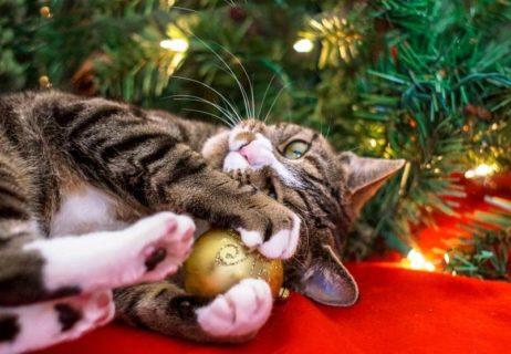 cat christmas tree.jpg.838x0_q67_crop-smart