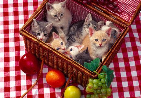 cat_03_rk0844_21_p