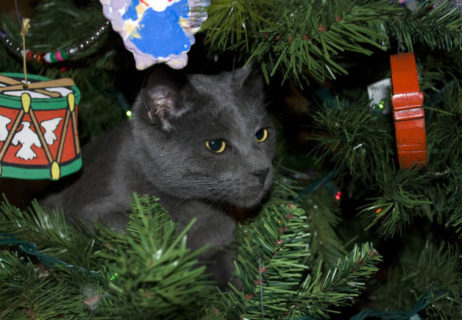 christmas_tree_cats_640_13