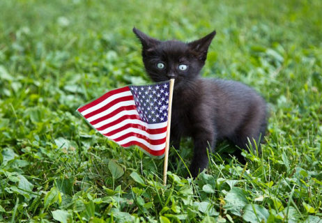 Kitten and Flag