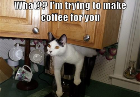 funny-picture-of-cat-making-coffee2