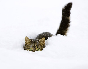 image 2 - cats_and_snow_ (4)