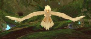 image5whitetickbird
