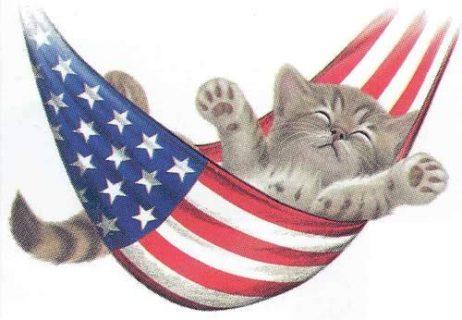 july-4-kitten