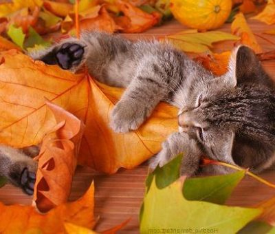 thanksgiving-cats-kitten-plays-fall-leaves
