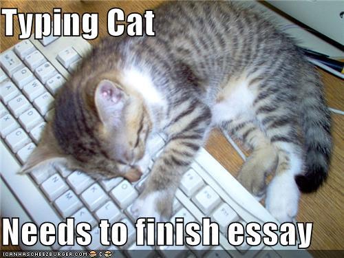 typingcat