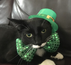 wyatt-st-patricks