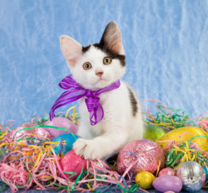 007_Easter_cats