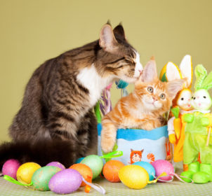 010_Easter_cats