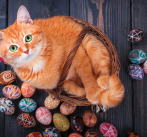 Red-cat-Easter-eggs